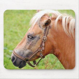 Horsehead 003