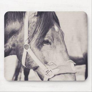 Horsehead 009