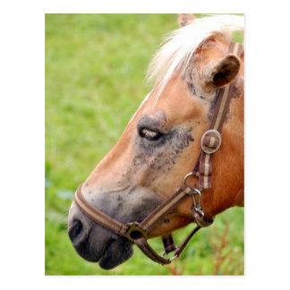 Horsehead Postcard
