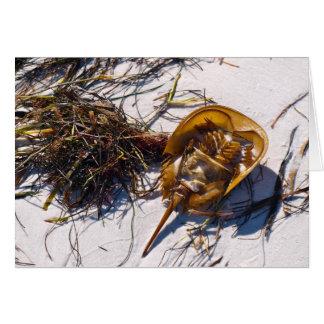 Horsehoe crab on Caladesi Island Card
