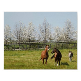 Horseplay: Two Horses and a Donkey in Spring Poster