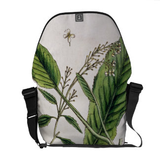 Horseradish plate 415 from A Curious Herbal pu Messenger Bags