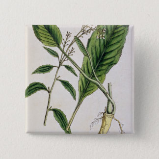Horseradish, plate 415 from 'A Curious Herbal', pu Pinback Button