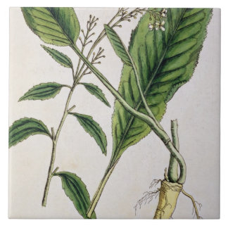 Horseradish, plate 415 from 'A Curious Herbal', pu Large Square Tile