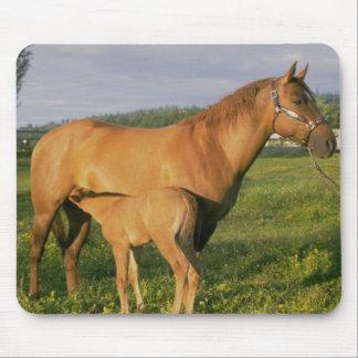 Horses 203 Mousepad