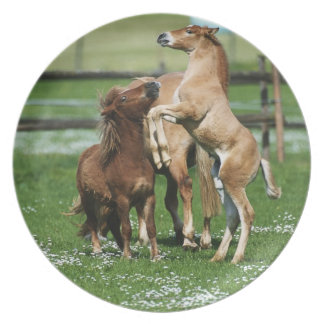 Horses 3 plate