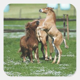 Horses 3 square sticker