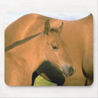 Horses 81 Mousepad