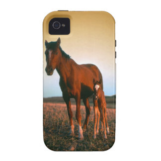 Horses a Mare and Colt Vibe iPhone 4 Cases