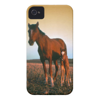 Horses a Mare and Colt iPhone 4 Cover