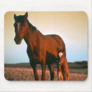 Horses, a Mare and Colt Mouse Pad