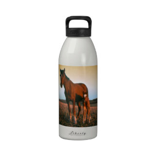 Horses, a Mare and Colt Water Bottles