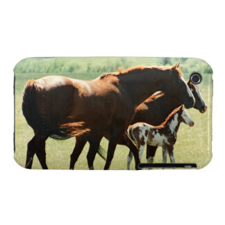 Horses and Foal Picture iPhone 3 Case-Mate Cases