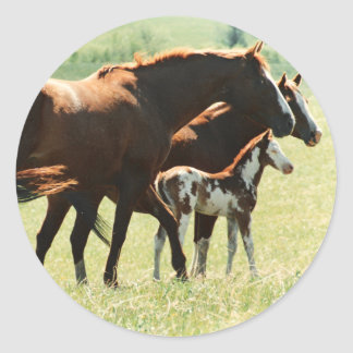 Horses and Foal Picture Classic Round Sticker