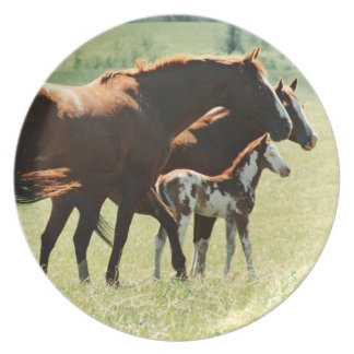 Horses and Foal Picture Dinner Plates