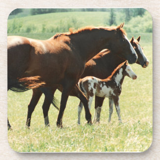 Horses and Foal Picture Drink Coaster