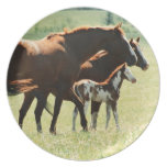 Horses and Foal Picture Melamine Plate