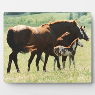 Horses and Foal Picture Plaque