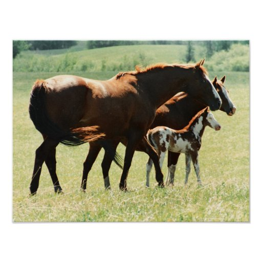 Horses and Foal Picture Print