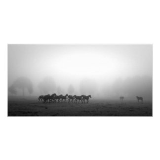 Horses and fog card