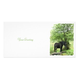 HORSES AND PONIES - BLACK MARE photocard