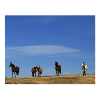 Horses and Sky Postcards