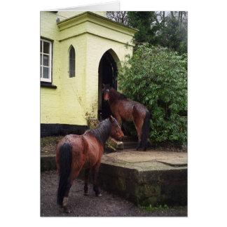 Horses at a pub card