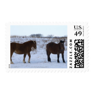 Horses at Cape Kiritappu, Hokkaido Prefecture, Postage Stamp