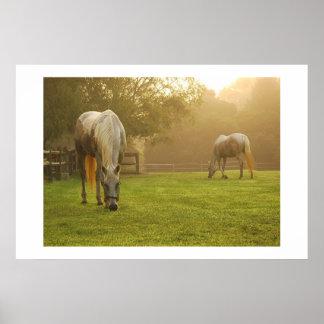 Horses at dawn print