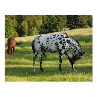Horses at Evening Postcard