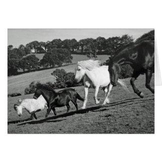 Horses At Play Card
