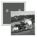 Horses At Play Pinback Button