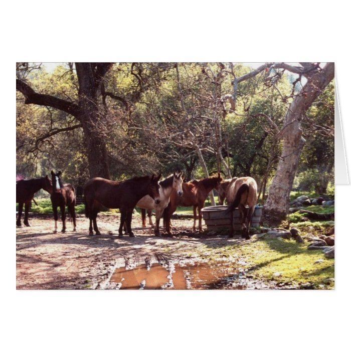 Horses at the Watering Hole Southwest Art Notecard