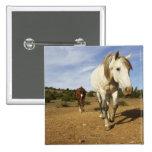 Horses, Aude, Languedoc-Roussillon, France Pinback Button