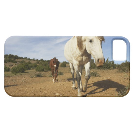Horses, Aude, Languedoc-Roussillon, France iPhone SE/5/5s Case