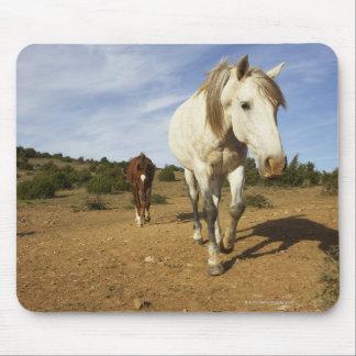 Horses, Aude, Languedoc-Roussillon, France Mouse Pad