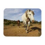 Horses, Aude, Languedoc-Roussillon, France Vinyl Magnets