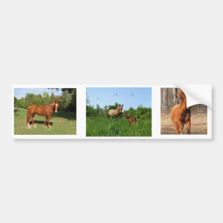 Horses - Beautiful Horses Car Bumper Sticker