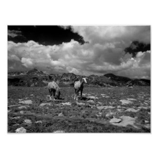 Horses (Black and White) Poster