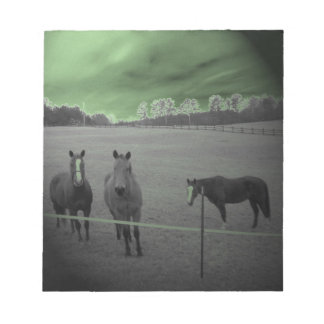 Horses black and white with green memo pad