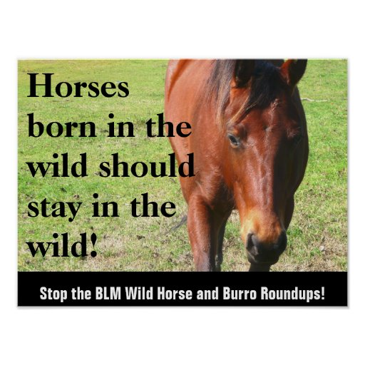 Horses born in the wild should stay in the Wild Poster