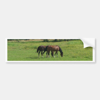 Horses Car Bumper Sticker