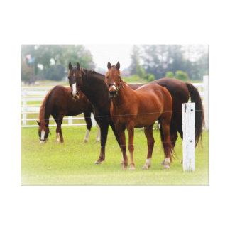 Horses/Canvas Wrap Canvas Print