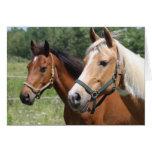 Horses Card