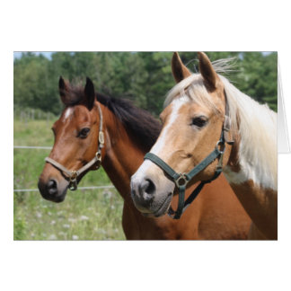 Horses Cards