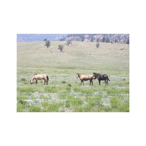 Horses Colorado Canvas Print