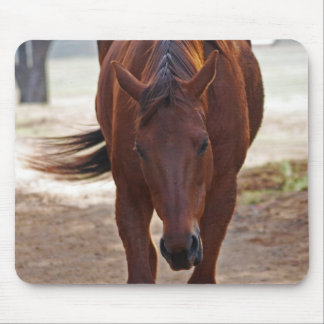 Horses coming home mouse pad