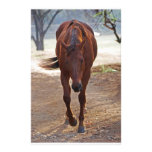 Horses coming home stationery paper