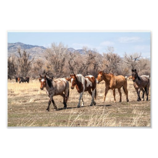 Horses Coming In from Pasture Photograph