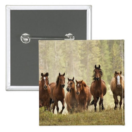 Horses cresting small hill during roundup, 2 2 inch square button